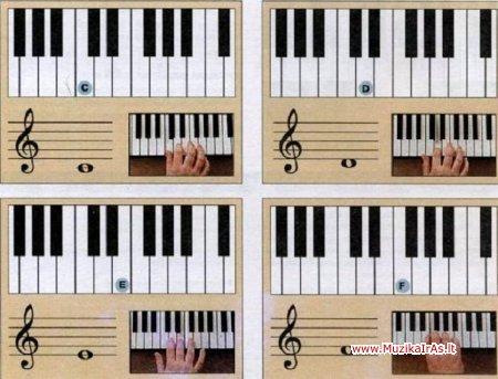 Klavišai.Terry Burrows (Терри Барроуз) - всё о клавишах.