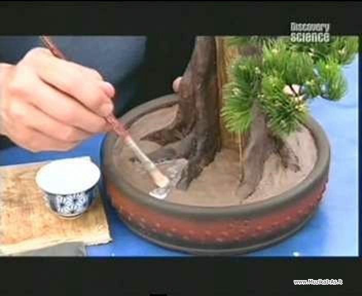 Как делают искусственные бонсаи своими руками6